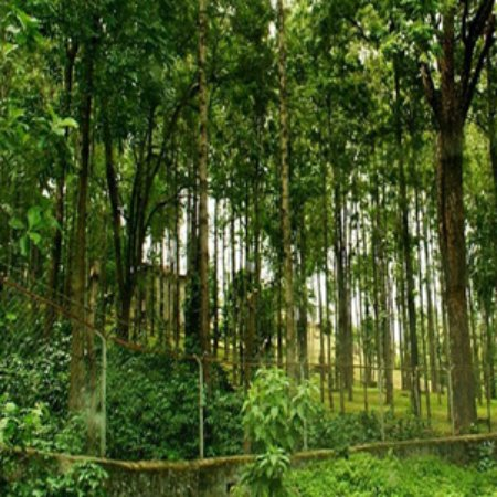 sandalwood is an example of which forest