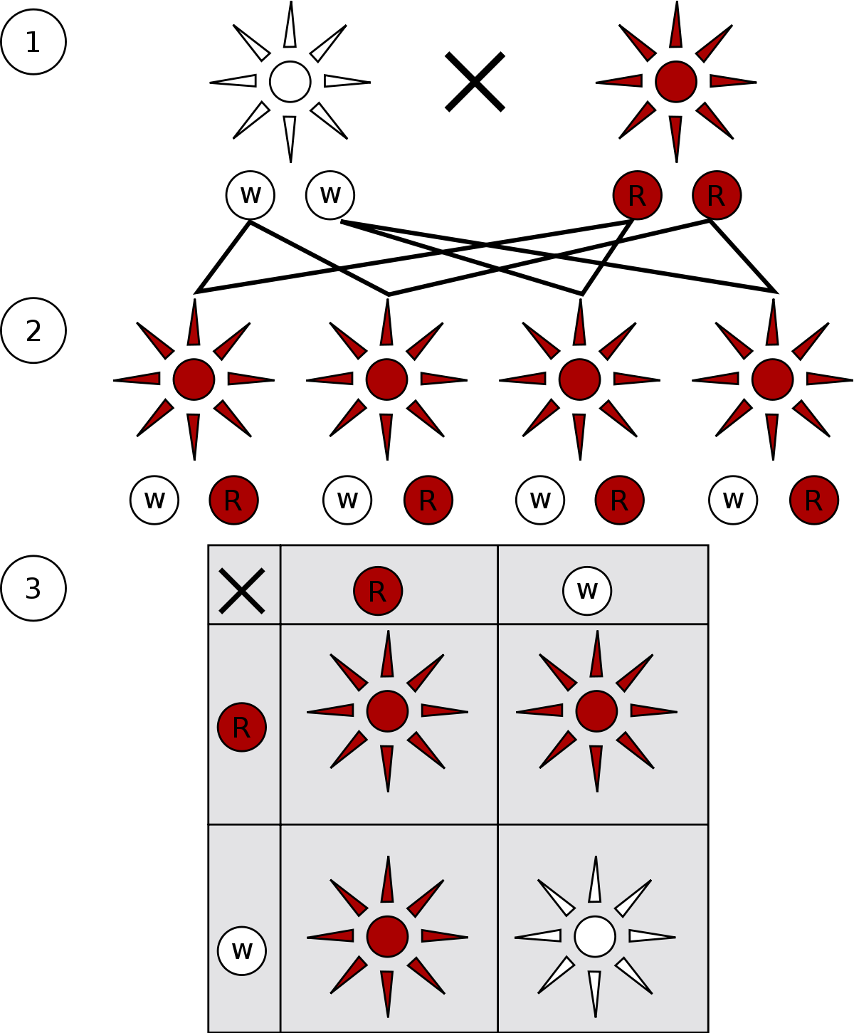 genotype example of incomplete dominance