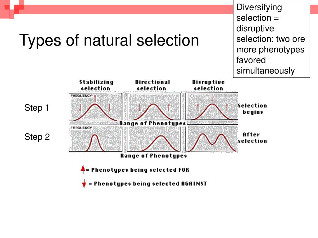 example of disruptive selection in nature