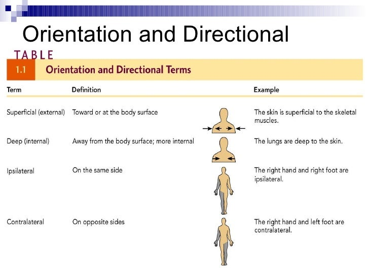 example of directional selection in humans