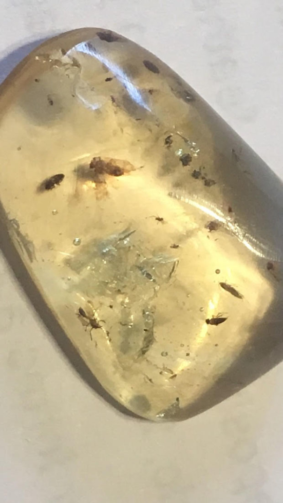 an insect trapped in amber is an example of what