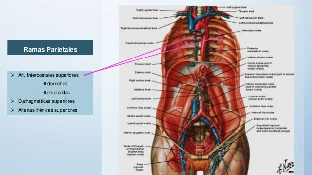 the aorta is an example of a n