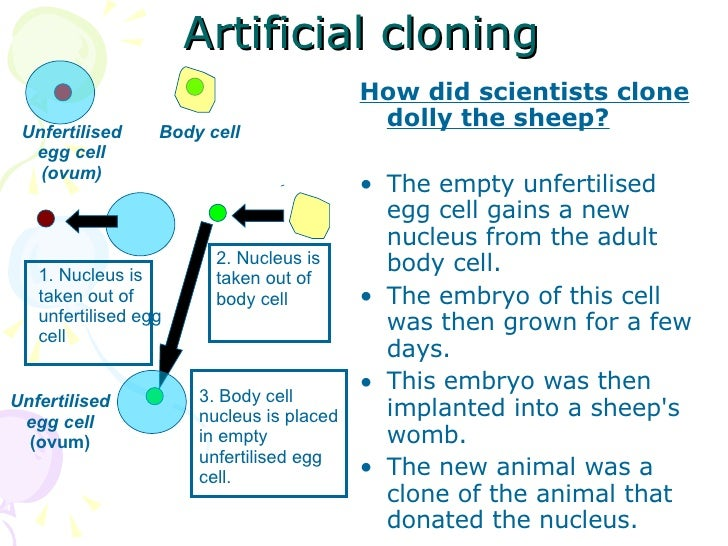 what is an example of cloning